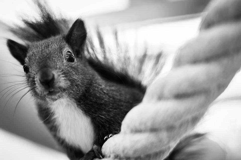 Squirrel, Animal, Rodent, Animal World, Foraging