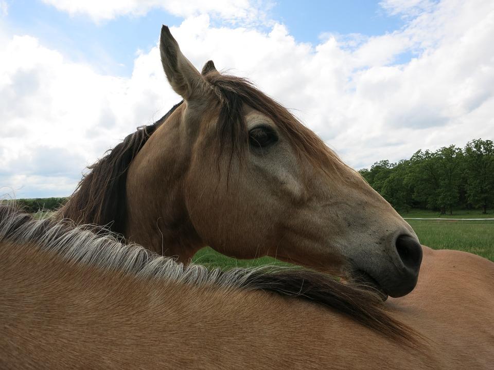 Horse, Ranch, Country, Farm, Animal, Rural, Western