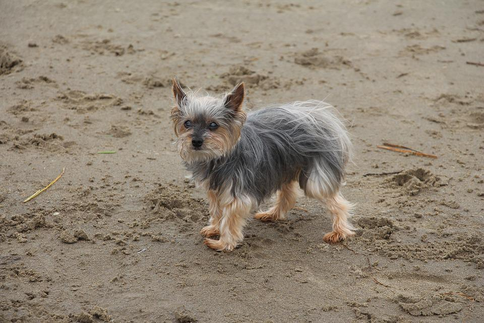 Dog, Beach, Sand, Coast, Animal