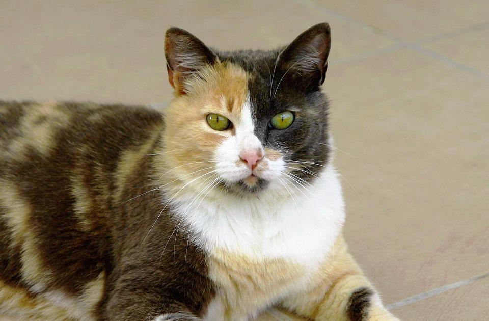 Cat, Green Eyes, Sand Black And White, Animal, Cute