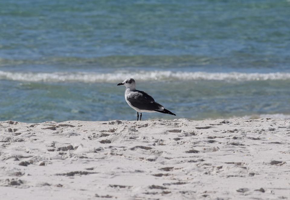 Herring Gull, Gull, Shore Bird, Animal, Nature, Sand