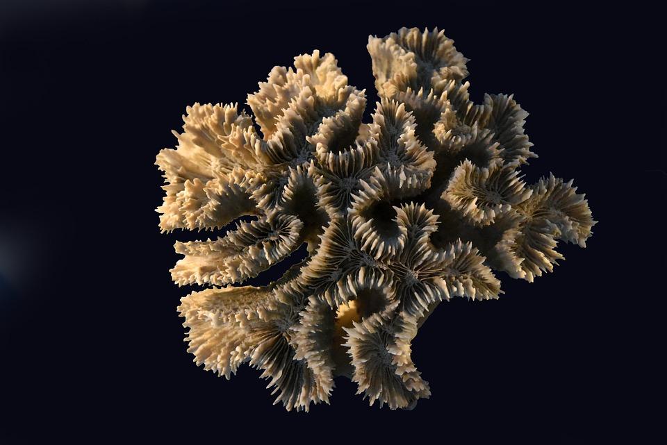 Corals, Sea, Exoskeleton, Animal, Cnidarians, Ocean
