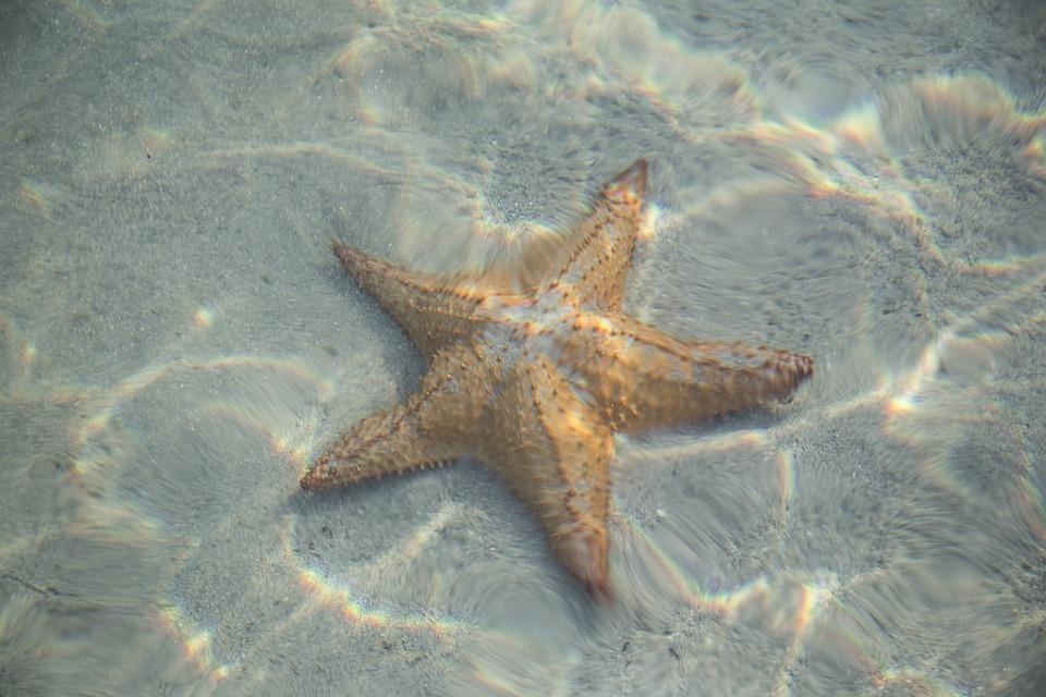 Star, Fish, Starfish, Animal, Sea, Ocean, Vacation