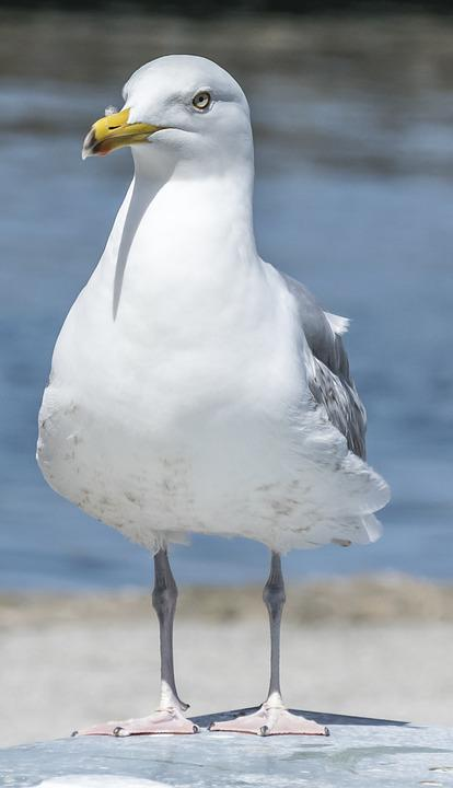 Bird, Animal World, Nature, Seagull, Animal