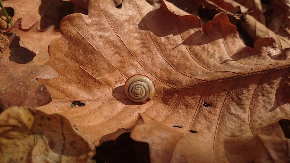 Snail, Bespozvonochnoe, Animal, Clam, Sheet, Dry