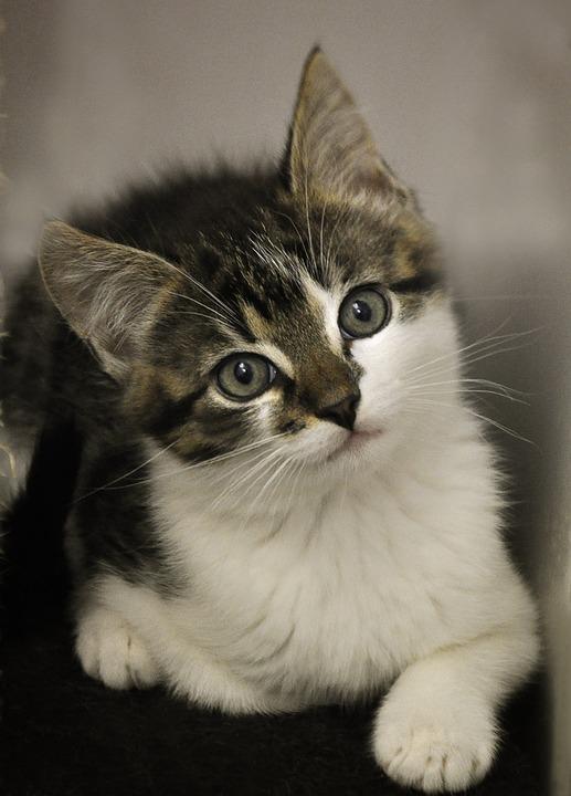 Cat Baby, Cat, Animal Shelter, Animal Welfare