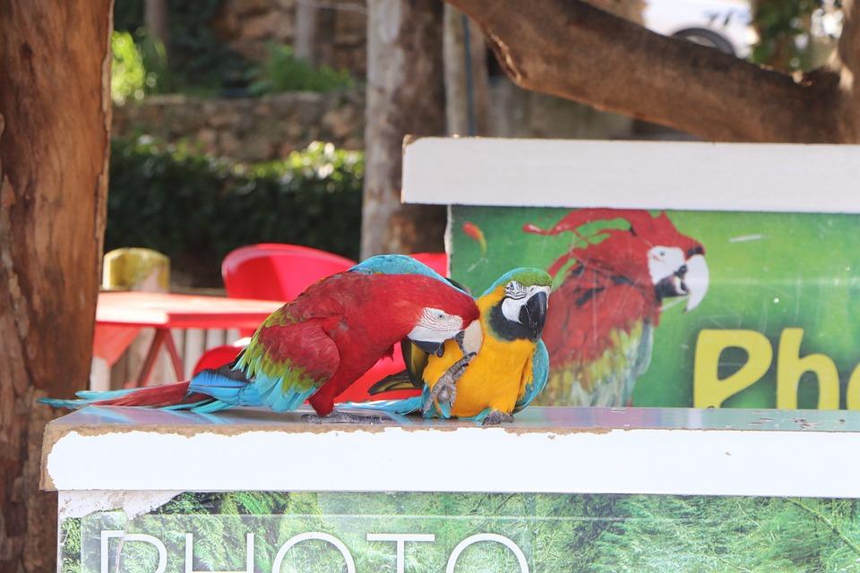 Parrot, Parrots, Bird, Birds, Show, Circus, Animal