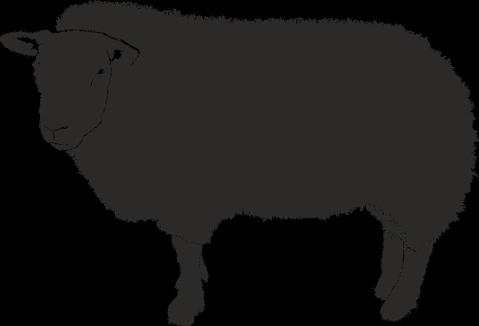 Sheep, Silhouette, Black, Isolated Form, Animal, Shadow