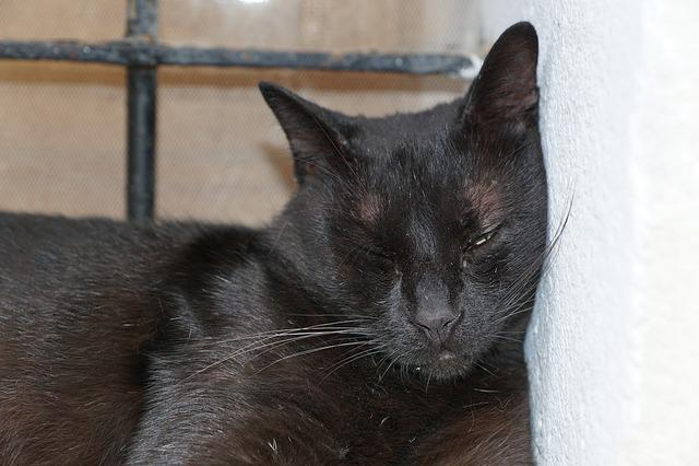 Cat, Sleep, Animal, Cute, Kitten, Barsik, Ibiza