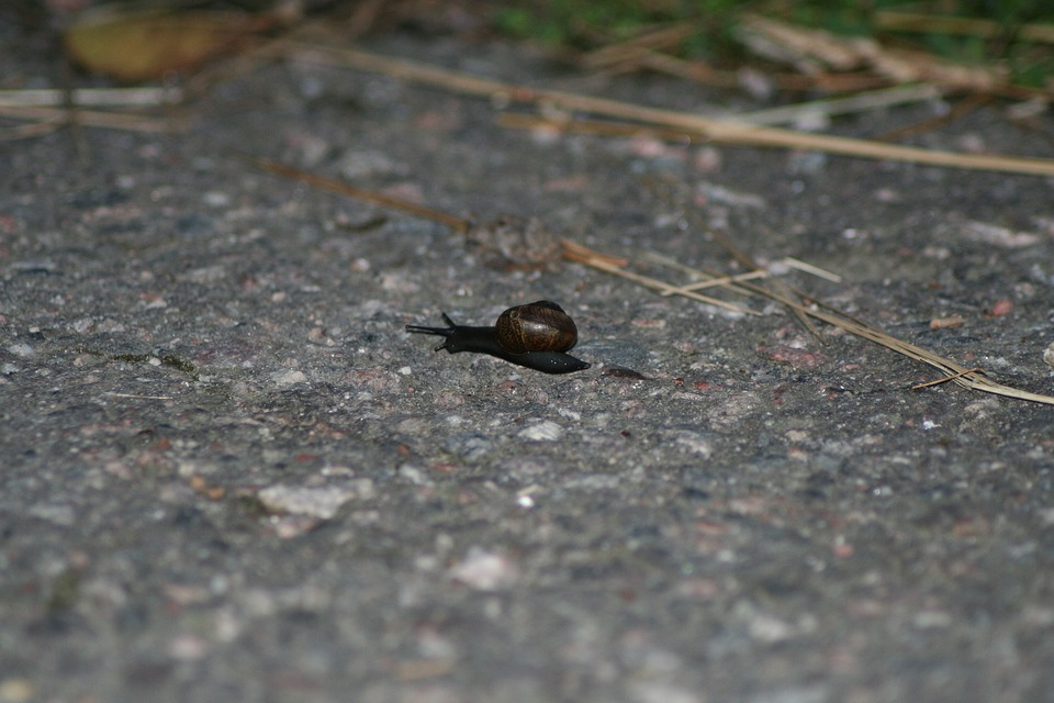 Gastropoda, Snail, Small, Moving, Animal, Garden, Slug