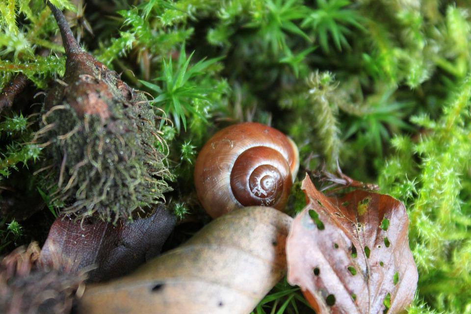 Snail, Leaves, Shell, Forest, Nature, Animal, Autumn