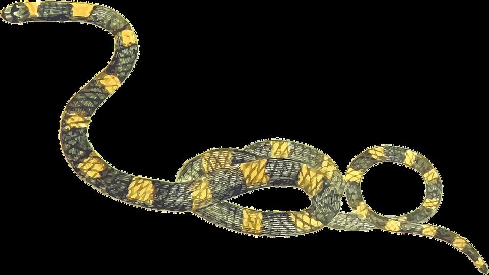 Animal, Reptile, Snake