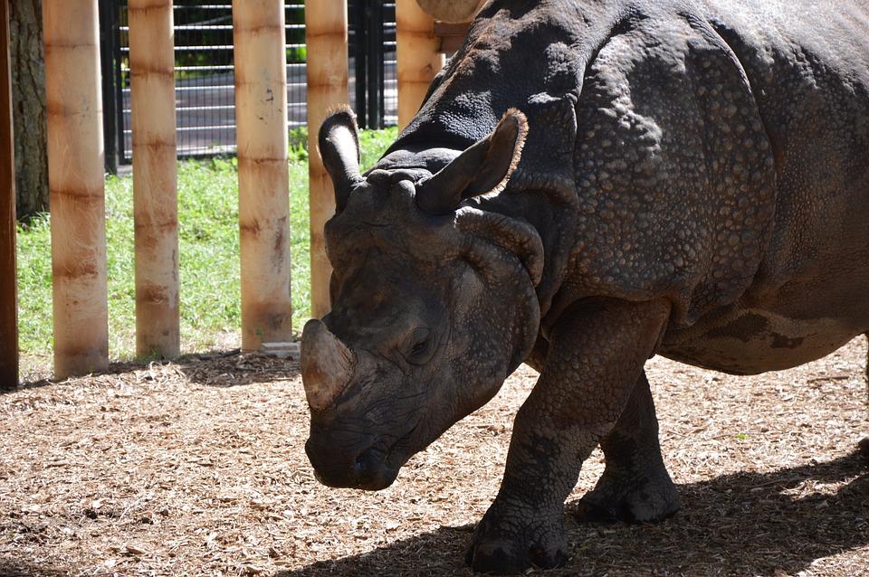 Rhino, Nature, Zoo, Madrid, Spain, Animals, Animal