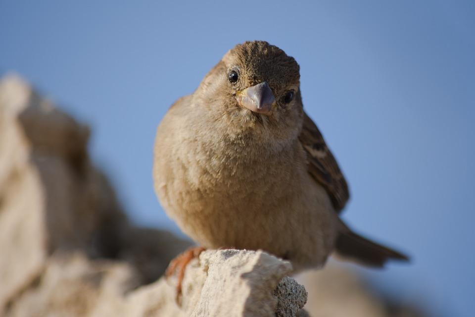 Sparrow, Nature, Wildlife, Bird, Animal, Outdoors