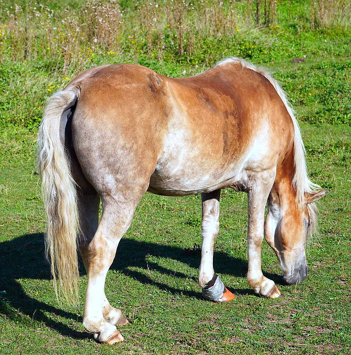 Animal, Horse, Pasture, Meadow, Mammal, Species, Equine