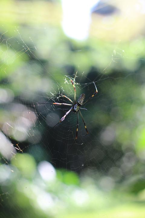 Spider, Nature, Web, Green, Animal, Scary, Spider Web