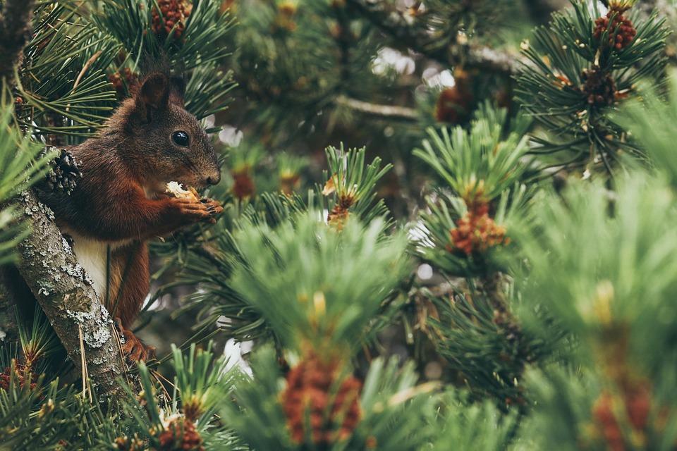 Squirrel, Animal, Tree, Nature, Cute, Wild