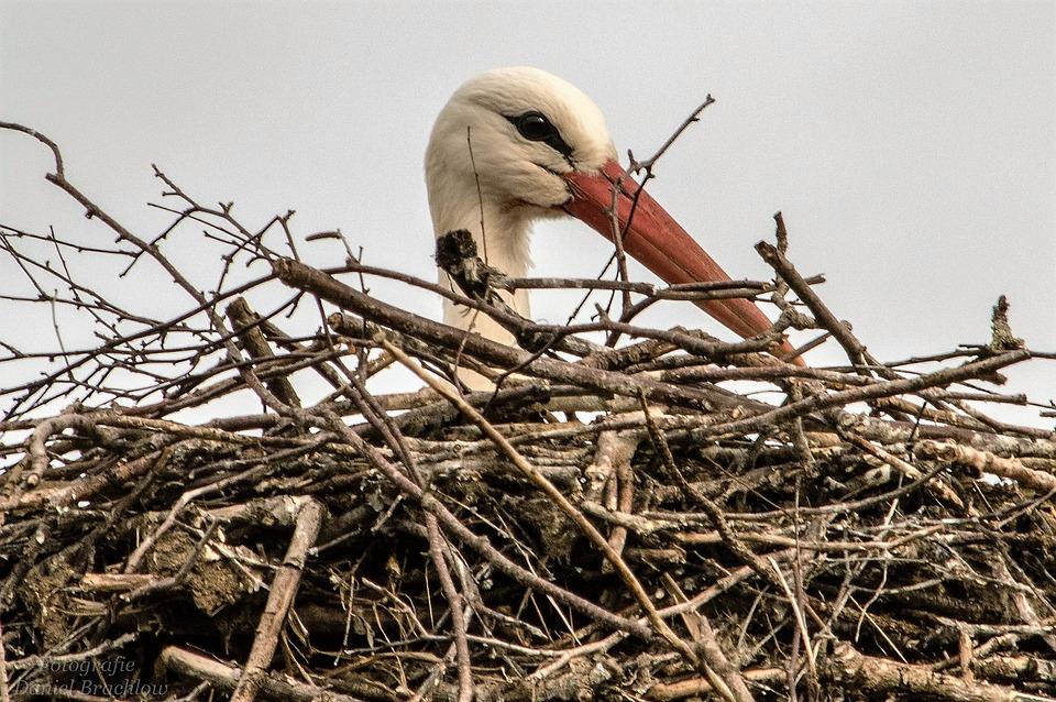 Stork, Bird, Animal, Red Beak, Birds, Nature