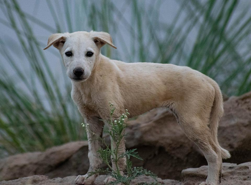 Dog, Stray Dog, Pup, Puppy, Animal, Nature, Sad, Cute