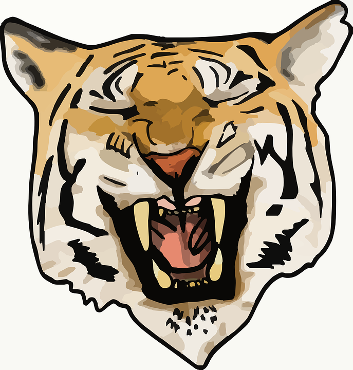 Tiger, Wildcat, Animal, Safari, Carnivore, Africa