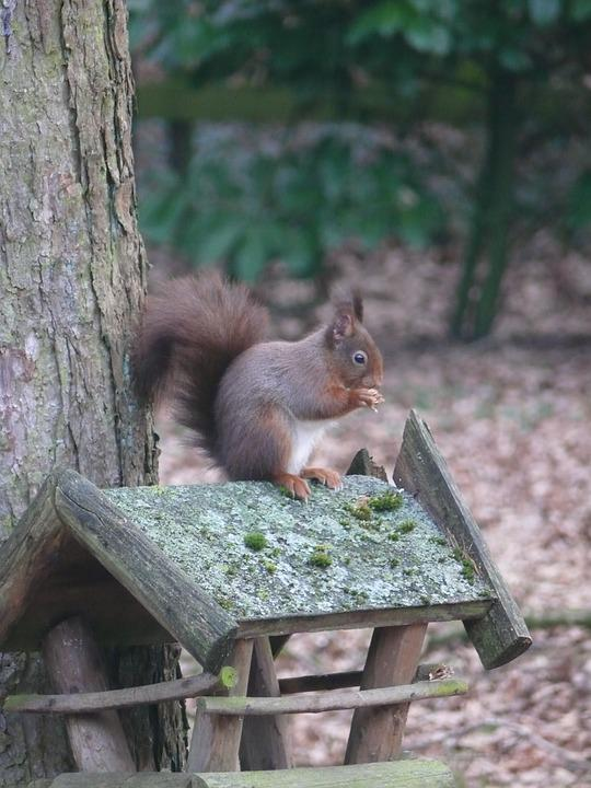 Squirrel, Nature, Forest, Rodents, Animal, Tree, Cute