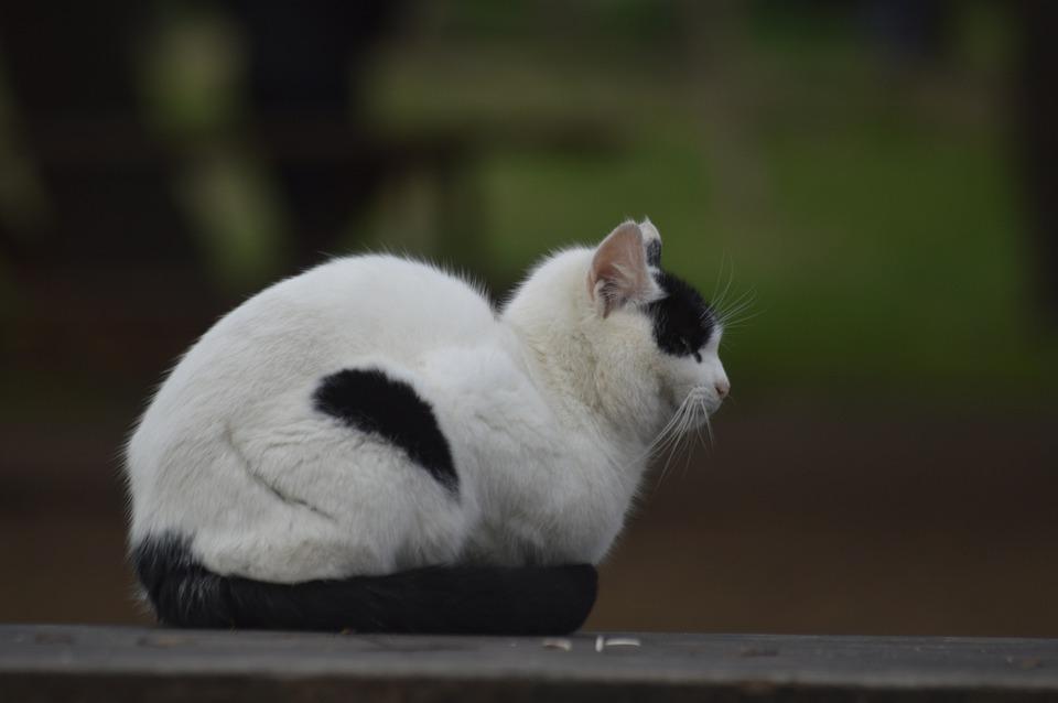 Cat, Black And White, Animal, Turkey, The Homeless