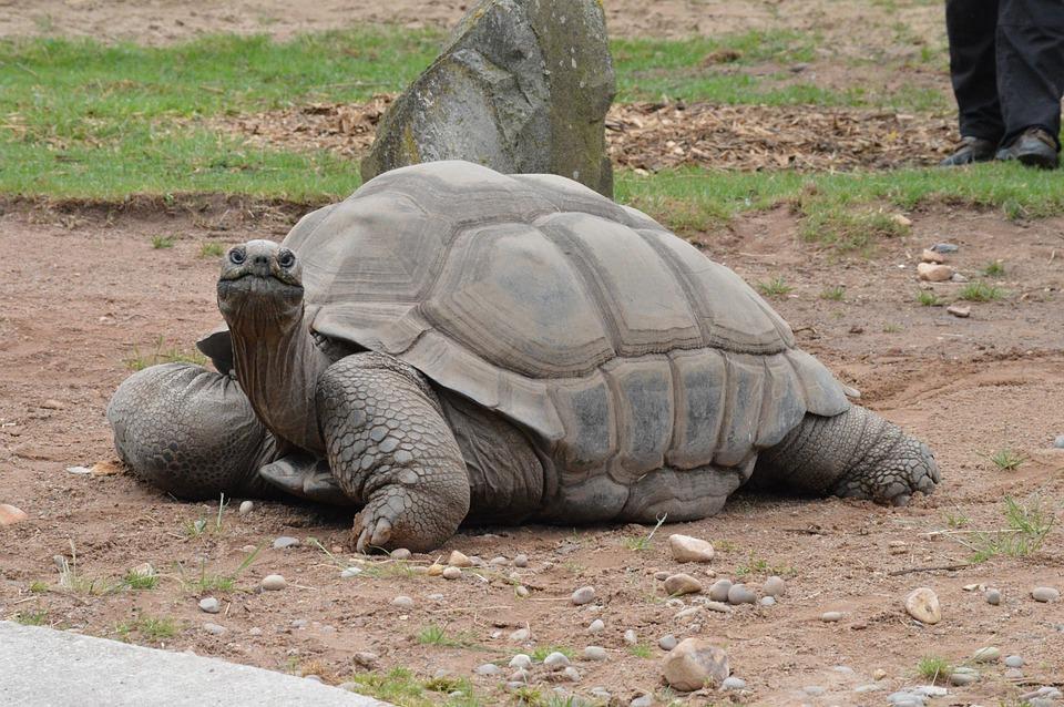 Animal, Wildlife, Nature, Turtle, Reptile