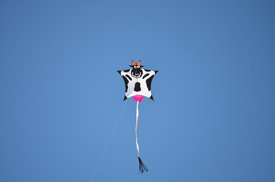 Kite, Cow, Animal, Sky, Udders, Cow Animal