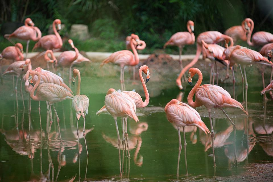 Bird, Flagmingo, Animal, W, Nature, Swan, Owl, Water