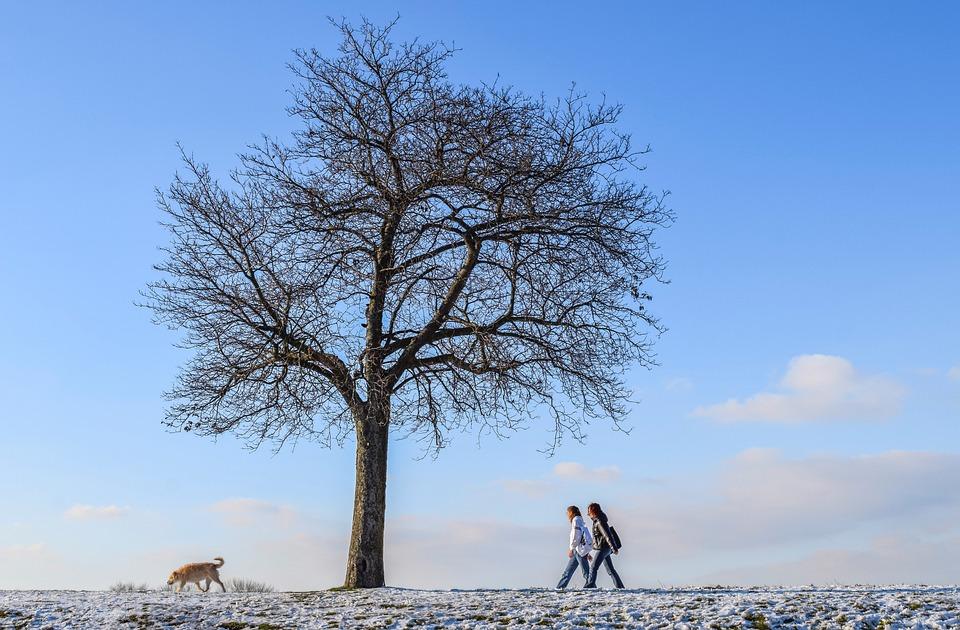 Winter, Walk, People, Dog, Tree, Animal, Cold, Snow