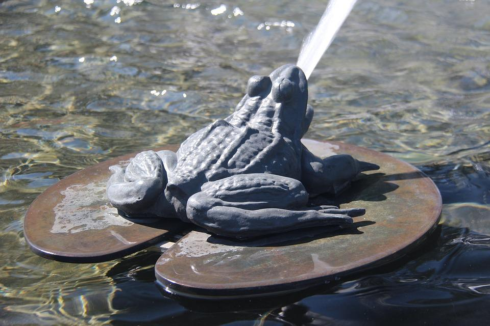 Frog, Water Fountain, Animal