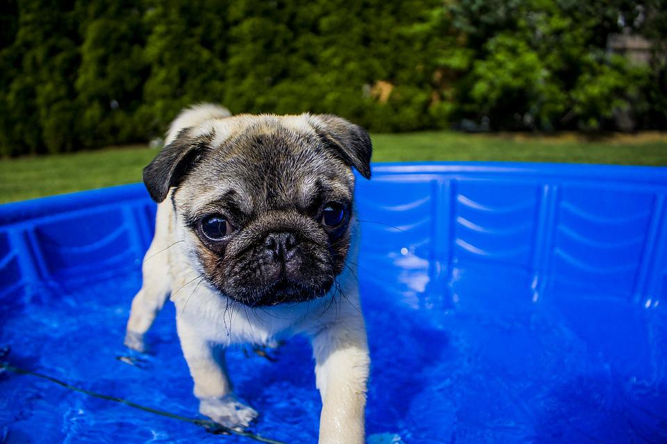 Swimming, Puppy, Summer, Dog, Funny, Animal, Water, Pet