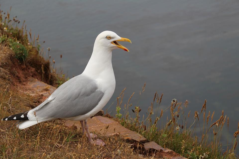 Nature, Seagull, Bird, Sea, Animal, Water, Water Bird