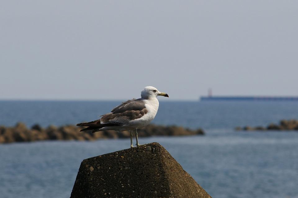 Animal, Sea, Beach, Wave Off Block, Seabird, Sea Gull