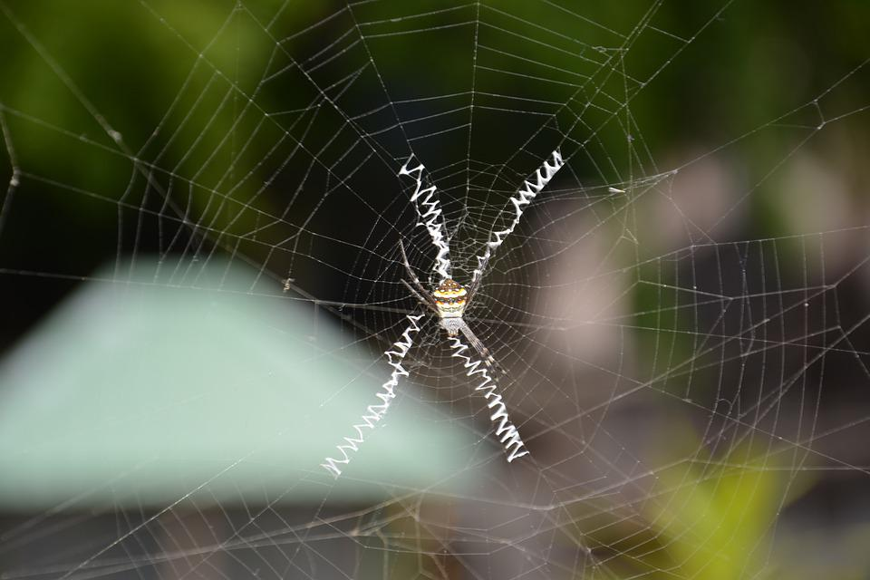 Spider, Nature, Insect, Morning, Animal, Spiderweb, Web