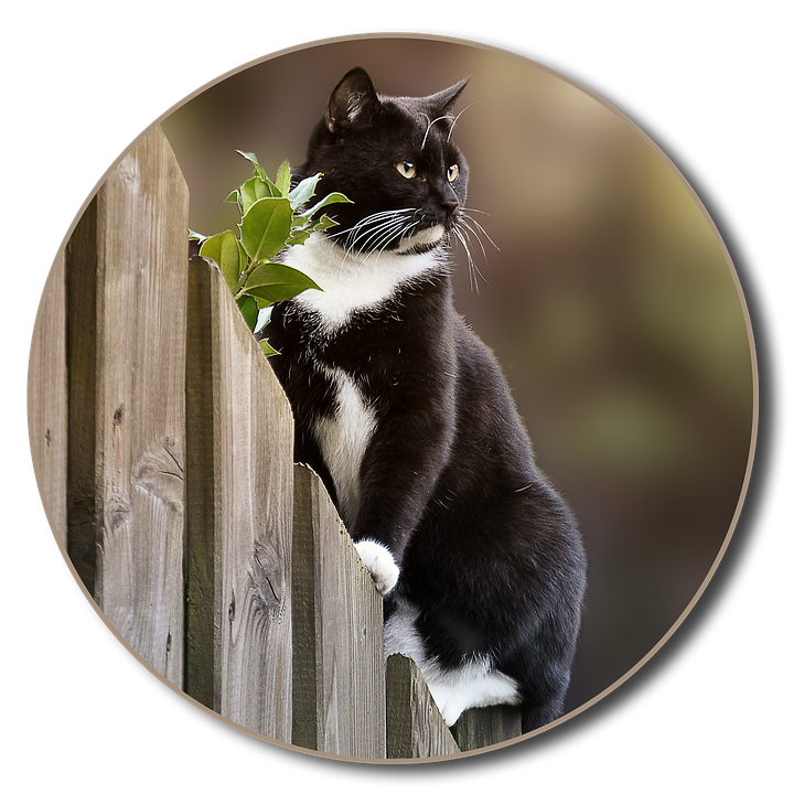 Cat, Png, Fence, Garden, Animal Welfare, Animal Shelter