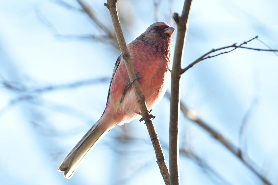 Natural, Wild Animals, Bird, Animal, Veneer System The
