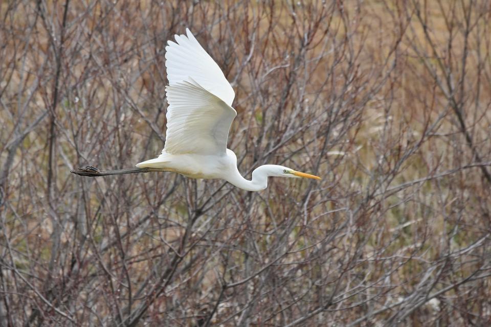 Animal, River, Waterside, Bird, Wild Birds, Heron