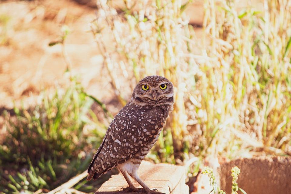 Owl, Bird, Animal, Eyes, Wild, Nature