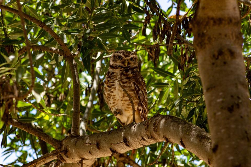 Owl, Perched, Animal, Bird, Wildlife, Nocturnal