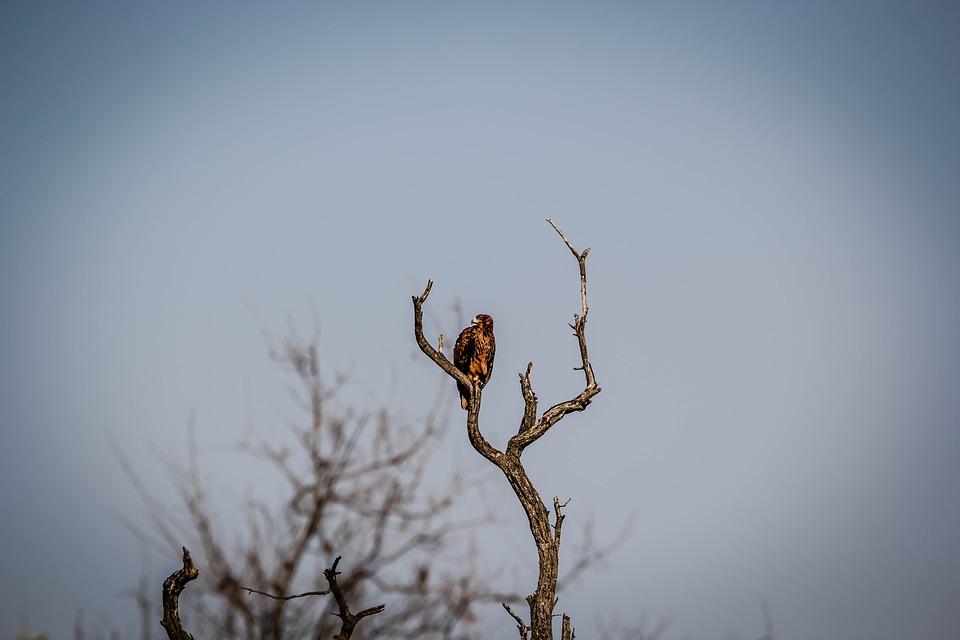 Animal, Wildlife, Nature, Tree, Bird, Fly, Flight
