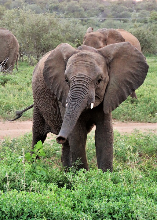 free photo animal wildlife happy trunk cute baby elephant max pixel