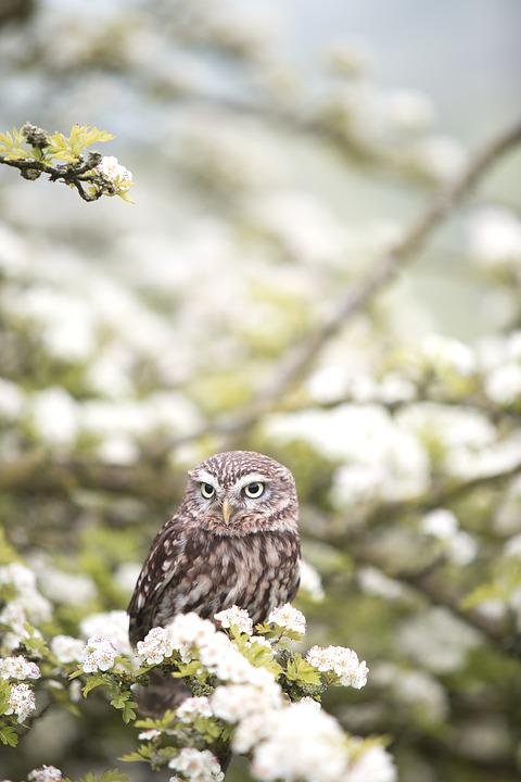 Owl, Bird, Animal, Flowers, Wildlife, Raptor