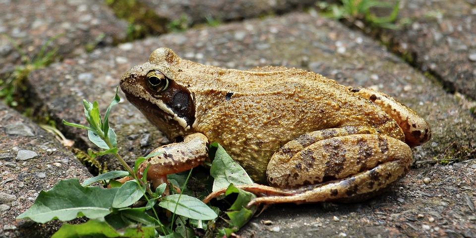 Frog, Wildlife Photography, Animal World, Animal