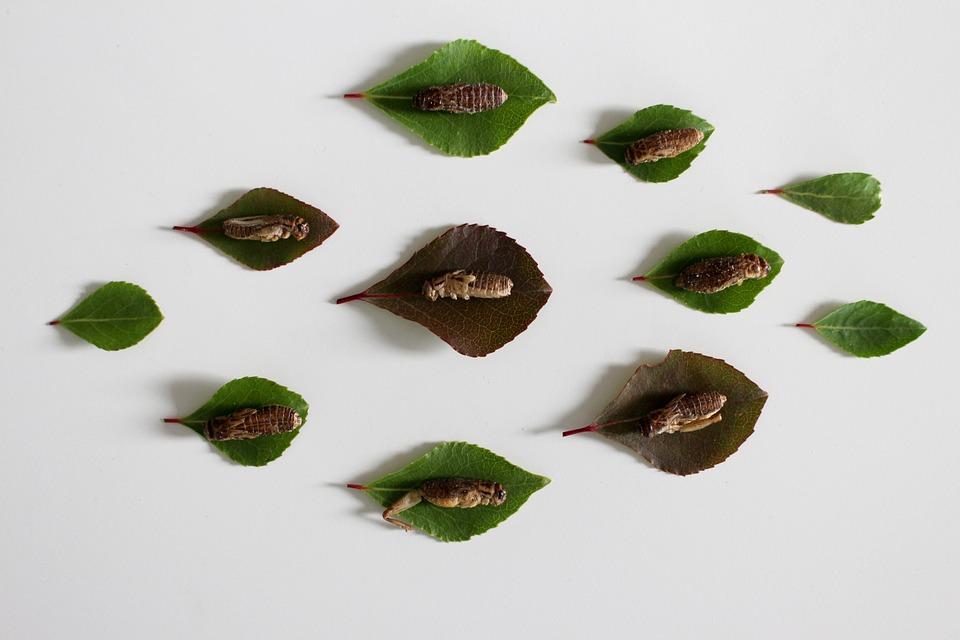 Insect, Eat, Animal, Beetle, Exotic, Wing, Macro