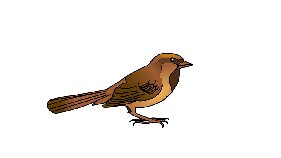 Sparrow, Bird, Nature, Wildlife, Animal, Feather, Wing