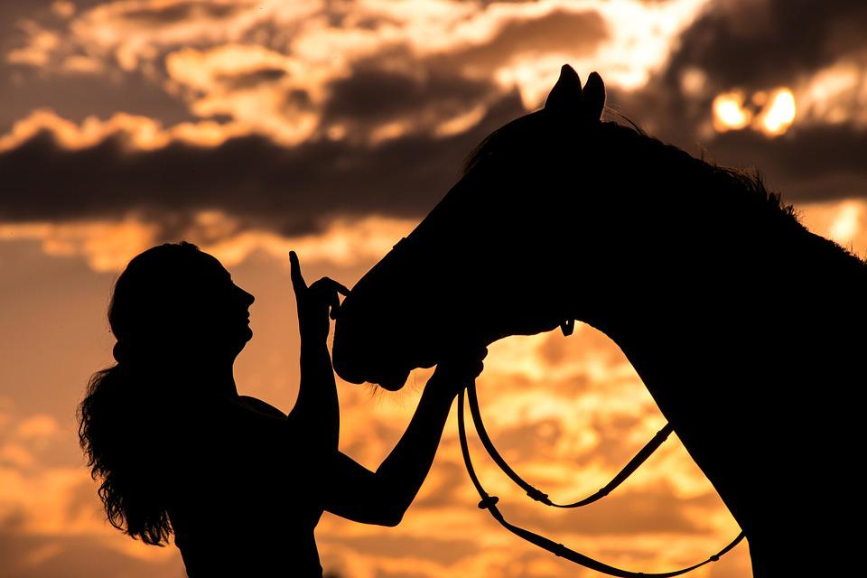 Silhouette, Woman, Horse, Animal, Evening Sun, Sunset