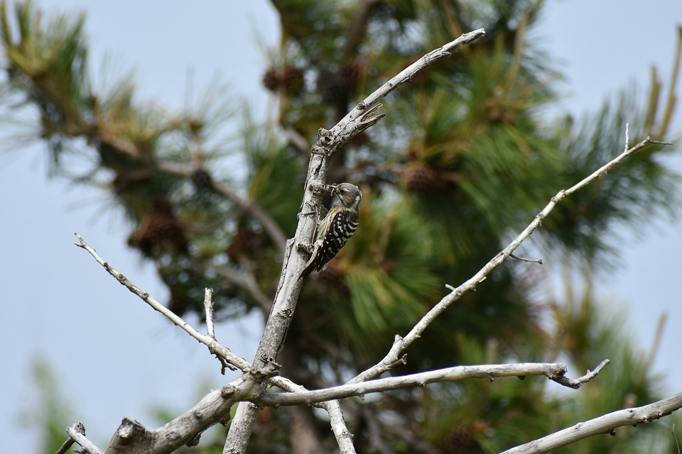 Animal, Forest, Wood, Bird, Wild Birds, Woodpecker
