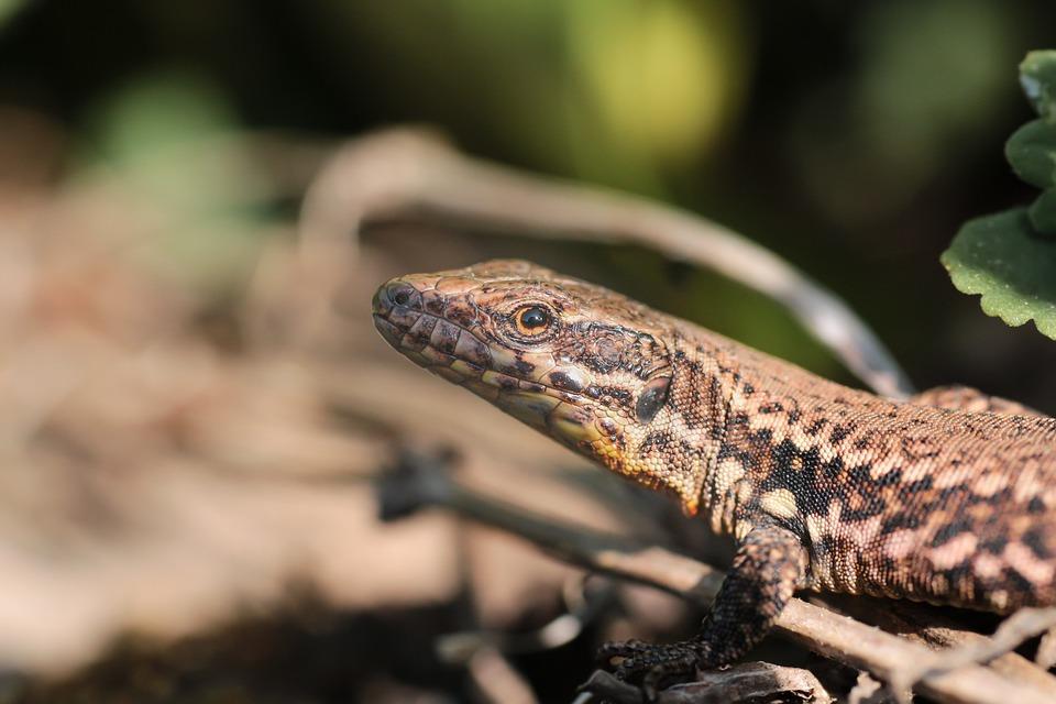 Reptile, Animal World, Lizard, Nature, Animal