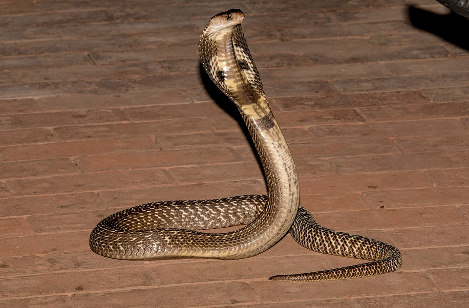Snake, Reptile, Wood, Nature, Animal, Animal World